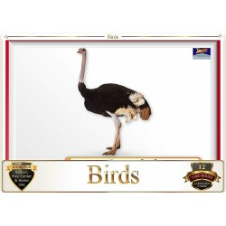 Flash Card Birds - Pack of...