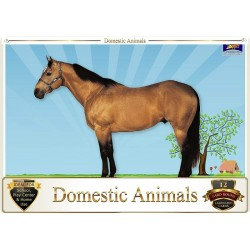 Flash Card Domestic Animals...