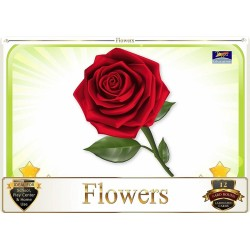 Flash Card Flowers - Pack...